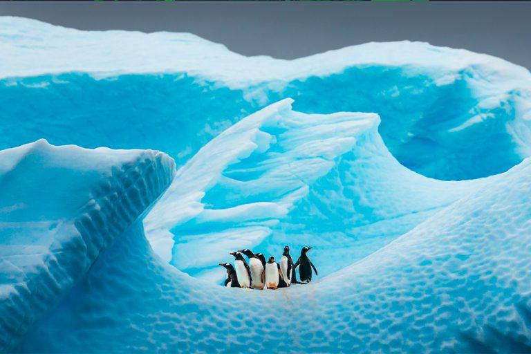 Pingûinos